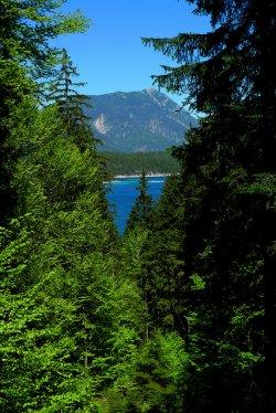 las nad jeziorem